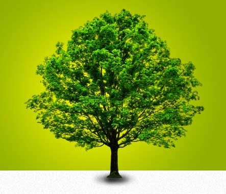Plant Memorial Tree